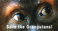 Save the orangutans