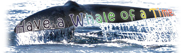 whale of a time workshop