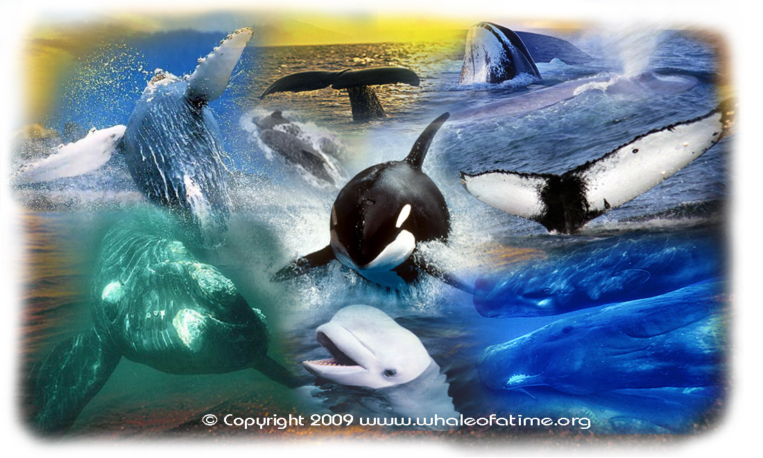 an overview of the whales dolphins and porpoises of cetacea in sea animal research