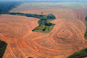 amazon deforestationl
